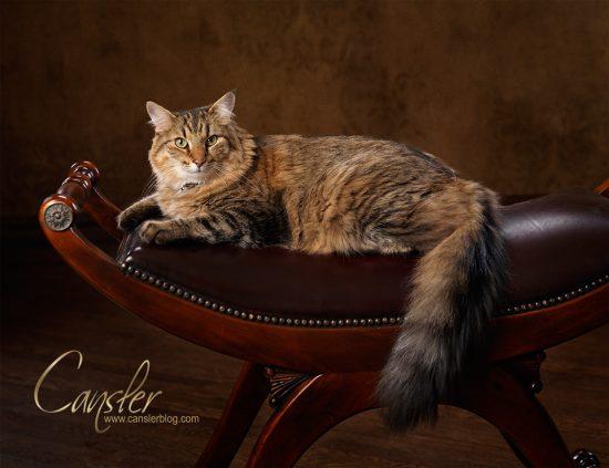 cat_59726